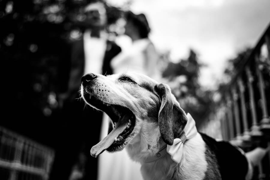 Hochzeitsfotograf Kippenheim